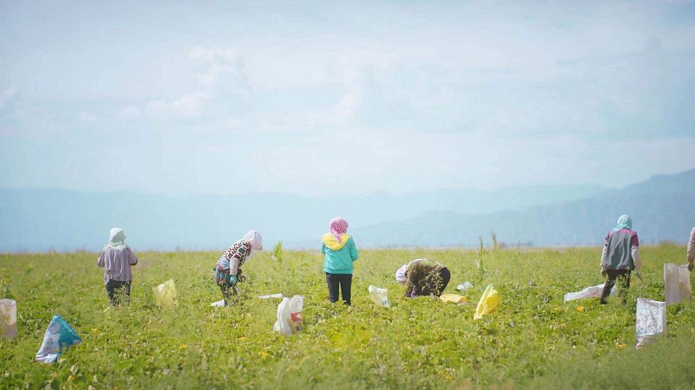 阿里巴巴集團及聚划算致力協助中國各地打造特色農產品區域公用品牌,為各地區扶貧攻堅。