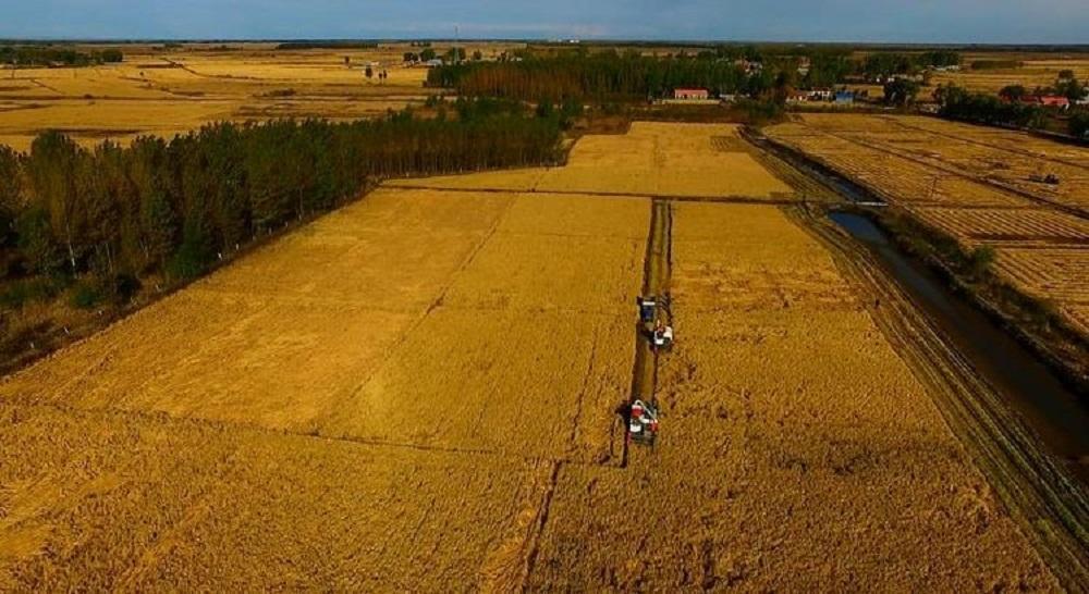 圖為內蒙古興安盟科右中旗的「阿里巴巴數字農場」。