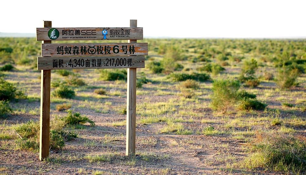 阿里巴巴集團過去4年半推出不少支持公益及環保的大型項目,包括倡導綠色及低碳生活「螞蟻森林」。