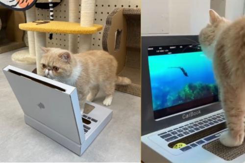 喵用電腦貓抓板